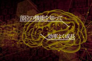 脳の部位ごとの機能を知れば、効率化した成長