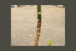 観葉植物の剪定の仕方